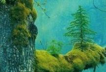 alberi in libertà
