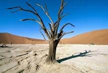 World Famous Deserts