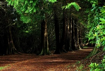 World Famous Forests