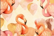Love Flamingoes / by Gabrielle Raife