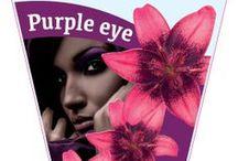 Purple Eye of Life