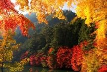 Stunning Tree Color / by Jeff Kroll Colorado Dream Properties
