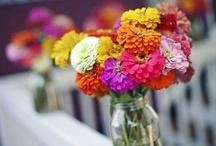 Summer Garden Colors / by Valerie Berstecher