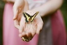 Butterfly Palette / by Valerie Berstecher