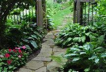 Garden / by Amy Orvin