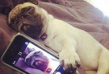Pug love / by Brie Freeman