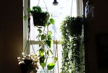 flowers and houseplant ideas