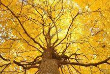 Autumn Awesomeness / by Rebecha Catlett