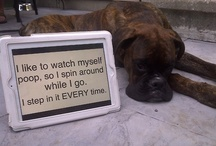 Dog Shaming / Hilarious dog shaming photos! if you have a dog you may remember moments that are similiar to these! / by Sabrina Berry