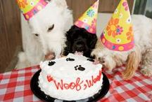 Pet Birthday / Dog cake recipes, cat birthday party ideas, pictures of pets enjoying their special day. We have everything you need to throw your pet the BEST BIRTHDAY EVER!   #petbirthday #barkday #adoptiversary #petholiday