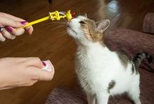 Train your Pet! / Tips and tricks to help you train your pet! #dogtraining #cattraining