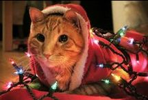 Holiday Pet Fun / Holiday crafts, activities, and tips for your dog, cat, and all your pets!