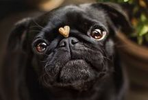 "Pugs / There's a reason why ""pug"" sounds like ""love""."