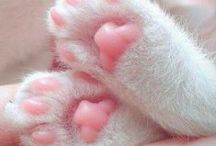 Paws / Just paws.