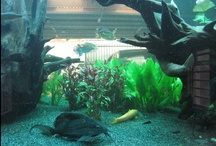 1200 Liter Tropical Aquarium