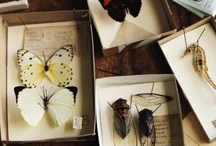 Naturalist Bugs and Animals