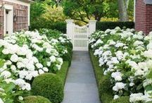 Garden, Porch & Yard / by Amy Rue