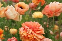 ♥ Garden / Pictures of gardens and flowers... some of them from my gardens / by Rebecca Jayne