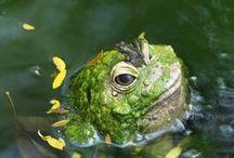 Amphibian ~ Reptile / by Mignonne Swilling