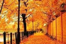 ♥ I Love Autumn / Everything Autumn... pumpkins, leaves, and beautiful decorating ideas.