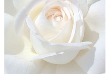 WHITE, CREAM AND GOLD / by Kirstin Leiby