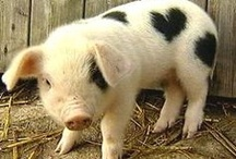 Animal Love - Pig❤ / by Tracey Jackson