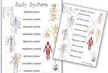 Homeschool Anatomy / an overview of health and anatomy