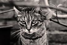 Cats / by Manon van den Arend