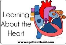 Homeschool Anatomy; Circulatory System