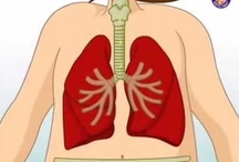 Homeschool Anatomy; Respiratory System