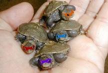 Turtles / by Rachel Alexander