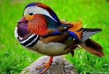 Beautiful / Nature is amazing!