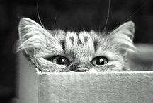 Kitties / by Katy Hanson