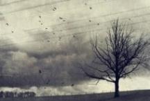 Beautiful Photos / :)