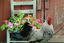 chickens / by Virgie Fisher