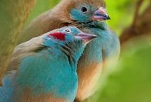 birds / by Virgie Fisher