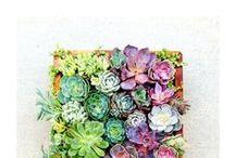 Hurrah for Succulents!