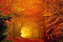 Fall Leaves Fall / by Sandy Henkensiefken
