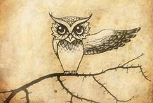 Owl Love / Owls.