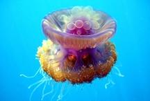 Blob like a Jellyfish (blob) :D