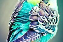 Inspire-se / Acrescente cor aos seus dias!