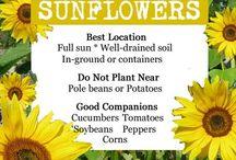 Gardening / DIY Plants Flowers  Feeders Vegetables Fruits