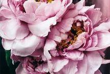 Flower Power / We love love LOVE flowers.