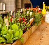 Uma Horta em Casa / Cultivar uma horta em casa é sinal de saúde e bem-estar para toda a família, seja qual for o tamanho ou a variedade de ervas, temperos ou até vegetais. Permite uma alimentação de qualidade e livre de agrotóxicos.