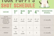 Kona / Puppies! All you need to know!  Supplies Potty training Basic commands training