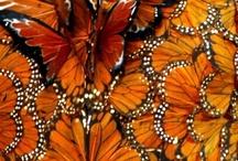 Critters: Butterflies, moths, dragon flies, etc.