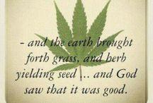 Herbs  / by Dwan