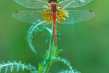 Dragonflys / by Shelly Stegall