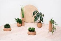 plant / planters / plants / gardening