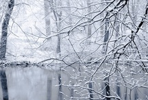 Winter / by Susan Ryder Paget